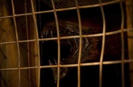 Imagen de Las crónicas de Riddick 3